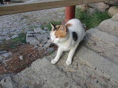 ベルガマ遺跡の猫