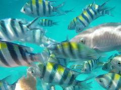 お魚いっぱい! シンガポールから40分のリゾート マレーシア・ティオマン島へ (Pulau Tioman, Malaysia))
