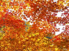Autumn Colors of Korea☆雪岳山 安東 順天湾 智異山 蛇死谷 ピアコル渓谷 ソウル・景福宮
