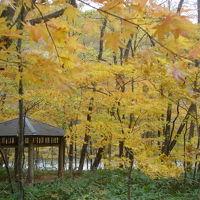 青森県 奥入瀬渓流の紅葉と石釜ピザ「ノースビレッジ」