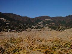 箱根の紅葉 2010 仙石原のすすきと絶景富士見温泉