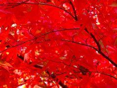 紅葉真っ盛りの箱根美術館 上巻