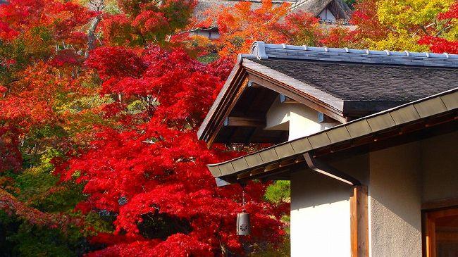 庭園の中で日頃入れない内庭は、この時期だけ公開されていました。<br /><br />普通に写真を撮影しながら、順路に沿って庭園を歩き、美術館<撮影禁止>の1階と2階を見て廻れば、おおよそ1時間掛かります。<br /><br />HP・・・ http://www.moaart.or.jp/hakone/index.html<br /><br />写真は、内庭の紅葉です。