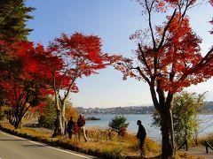 河口湖 もみじトンネルの紅葉