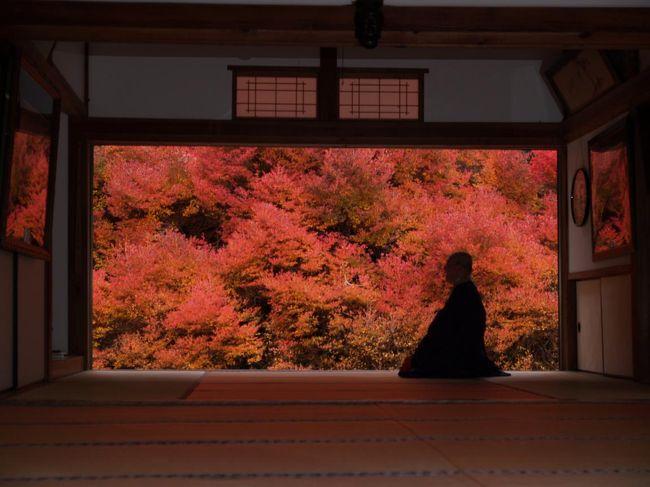 兵庫県豊岡市但東町相田の安国寺のドウダンツツジの紅葉を見に行きました。数年前から行きたいと思っていましたが、なかなかタイミングが合わず、ようやく見ることができました。
