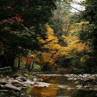 ひとり旅 [815] 美しい秋色の山景色を満喫!西中国山地方面へ紅葉狩ドライブ<寂地峡~弥栄峡>山口県岩国市錦町