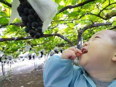 【かーくん01歳07ヶ月】味覚の秋♪ぱくぱく!おいちぃ!ブドウ狩り