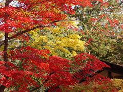 武家屋敷と抱返り渓谷 ~秋の陣~