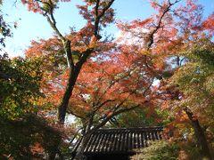 城下町・秋月の紅葉!(2010.11.18)