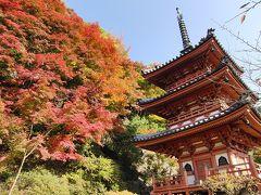 京都('10 紅葉狩り)
