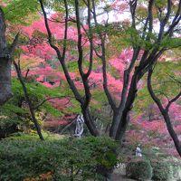 志賀、広島、京都、奈良、昼間高速バスとJR鈍行の「紅葉の旅」