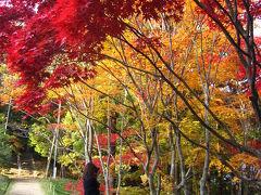 岡山/雪舟が修行したお寺 宝福寺の紅葉と名勝地豪渓