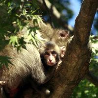 高崎山自然動物園 無料DAY 「Oh!ウッキゥキーな開放日!」