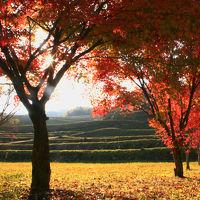 晩秋の豊後路をドライブ