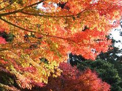 秋色の鎌倉散歩