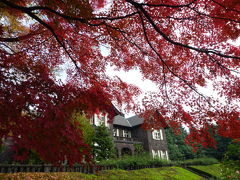 江戸の香り 美しい紅葉の東京名園めぐりVol1 旧古河庭園