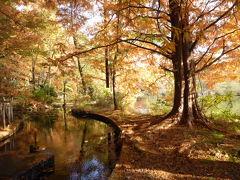 照姫伝説の美しい紅葉の石神井公園とフレンチ♪