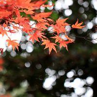 岸和田市 牛滝山の大威徳寺へ紅葉狩りに行ってきました。