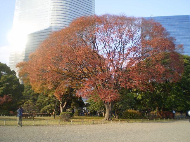 土曜日の午後、都心の紅葉を見てきました。<br />梯子してお台場・汐留のイルミネーションをお楽しんできました。<br /><br />イルミネーションの写真はよくありませんが雰囲気だけ楽しんでください。