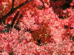 2010秋、平等院(1):11月20(1):平等院表参道、宇治茶の商店街、楓の紅葉、甍の鳳凰
