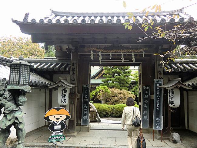 秘湯では有りませんがとても珍しい温泉宿を経験して来ました。<br />世界遺産、高野山に泊まるには宿坊と呼ばれるお寺に泊まるしか有りません。<br />現在52カ所の宿坊が有りますが唯一天然温泉が湧き出る宿坊が福智院です。<br />福智院は鎌倉時代より高野山に有り、宿坊としても800年の歴史が有り、敷地5000坪、井伊家とつながりの深い真言宗の立派なお寺です。<br />約5年前温泉が湧き、高野山で唯一の温泉宿坊となりました。<br />露天風呂も有りますが、畳敷きの風呂場には驚きました。<br />食事はもちろん精進料理で、ビールも焼酎もOKです。<br />オプションとして朝のお努めや写経が有ります。<br />お寺と温泉、悟りと俗界。高野山の懐は大きい。<br />宗派を問わず、信仰心の少ない私でも受け入れてくれます。<br />さすがに若い人は少ないようでしたが外人さんが多いのには驚きました。<br />一度は泊まってみたい温泉宿です。<br />高野山のお寺巡りと高野山温泉、宿坊『福智院」1泊2日のいい旅でした。<br />
