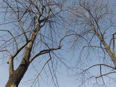 初冬の町田市芹ケ谷公園を散策