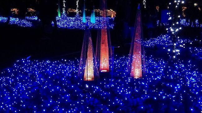 なばなの里のウインターイルミネーション・・・「冬華の競演」と題して、2010年11月5日〜2011年3月13日の間開催されています。<br /><br />その中で大きく5っに別れていました。<br />1.水上イルミネーション<br />2.光の回廊<br />3.光の雲海<br />4.ツインツリー<br />5.富士と海<br /><br />この旅行記は、3と4の光の雲海とツインツリー等です。