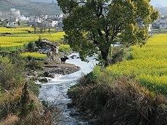 ★早春の安徽省古村(6)木雕楼と菜の花畑の盧村へ