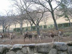 たまには「ベタ」な観光地めぐり0601   「東大寺&奈良公園」  ~奈良~