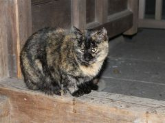 岐阜県海津の治水神社は、猫神社