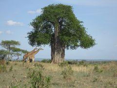 2010タンザニア大自然紀行10日間その1(ドバイからナイロビへ)