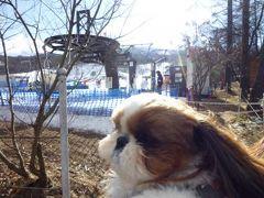 愛犬と過ごす冬の軽井沢inプリンスホテル Vol7(4日目午前) 軽井沢プリンスホテルのコテージと愛犬 高速道路で帰京