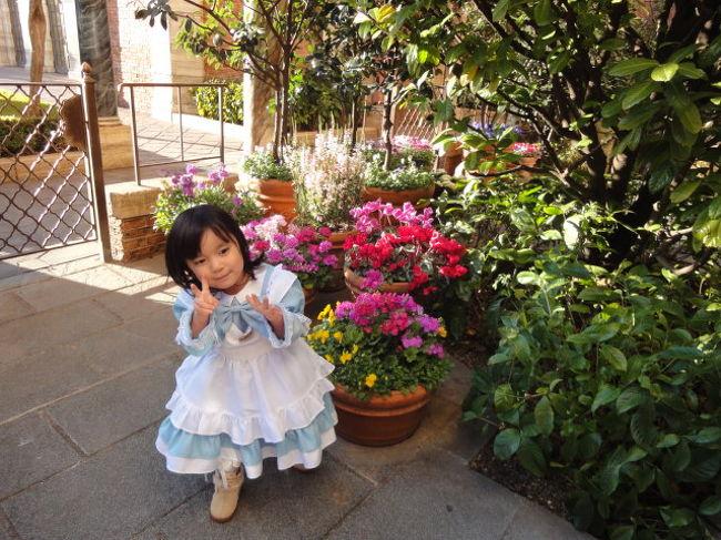 バルコニールームもいいな~と予約していましたが、<br />夜のショーもないんで、今回はヴェネツィアサイドのパラッツォパティオルームにしました。<br /><br />お花が咲いたコンテナがたくさん置かれ、<br />真っ白な雪だけの北海道から行った私たちには<br />ひとしおうれしいかったです。