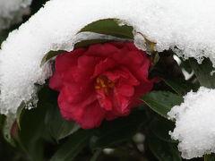2011冬、久し振りの大雪・天白川(1)