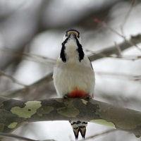 札幌の野鳥たち
