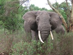 2010タンザニア大自然紀行10日間その3(マニャラ湖からセロネラへ)
