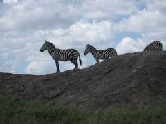 2010タンザニア大自然紀行10日間その4(セロネラからロボへ)