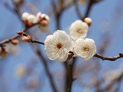 ♪春よ来い、早く来い