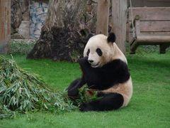 和歌山①~アドベンチャーワールドで双子のパンダを見る~