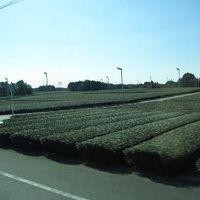 観山寺温泉・丸子宿・美保の松原 バスの旅 1  グリンピアで昼食
