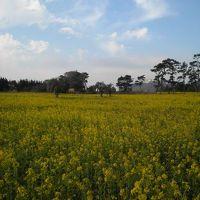 黄色の絨毯に逢いたくて、、IN伊良湖ガーデンホテルリゾート&スパ