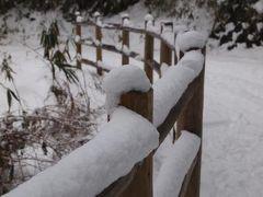 生駒の十割そばと雪と