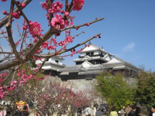 久々に妻と連休で休みが合い、折角だから温泉でもと計画していた所、某国営放送で放映されていた「坂の上の雲」にハマっていた為妻の希望で、舞台となった松山に行き先が決定!<br />本当は四国に行くんだったら、阪神タイガースがキャンプを行っている高知県が良かったんだけど、費用の都合等々で断念・・<br />松山と言えば日本の三名湯に数えられている道後温泉もあることですし、早春の伊予路を満喫して参りました。