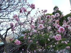 春一番!河津桜と優雅な伊東温泉の宿泊とグルメ Vol9(第2日目:夕刻~夜) 松月院と海女屋 スーパービュー踊り子号で帰京♪