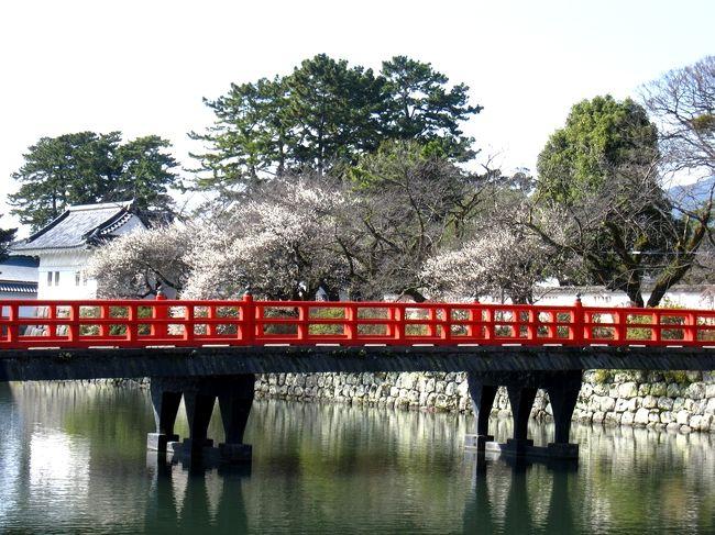 小田原城の梅と西海子小路の桜並木   いま、小田原がおもしろい。