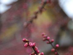 早春の京あるき~梅香漂う北野天満宮へ