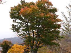 日光中善寺湖湖畔の紅葉