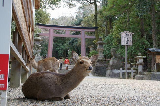 大阪へ行く途中、奈良で寄り道したかったのは、奈良公園。ちょいと鹿でも見に行こうかと。<br /><br />でも、一泊する事にしましたので、ゆっくり春日大社にも行ってみようかな。<br /><br />と言う事で、宿も延泊です。居心地も良いしね。