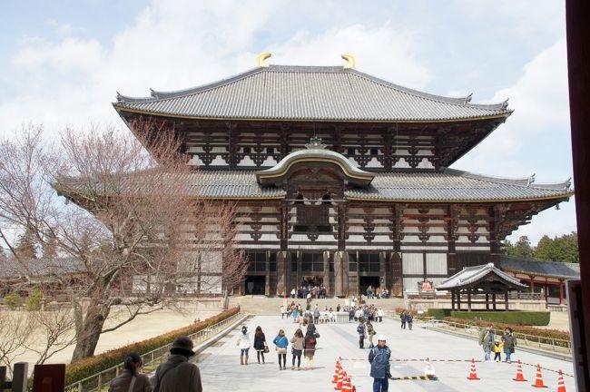 12.  奈良公園の散歩は、東大寺へ。大仏様にはお会いしませんでしたが。