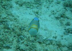 【お出掛け、お出掛け】ここでもやっぱり海水浴。revenge、Guam!!⑤ beach編